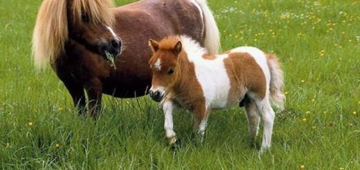 Приходи в пони-клуб всей семьей!